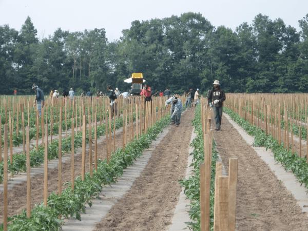 Chary Produce farm photo
